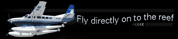 Fly directly on to the reef!